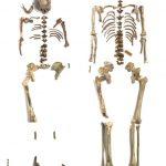Skelette | © J. Vogel / LVR-Landesmuseum Bonn